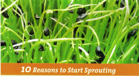 10 Reasons to Sprout